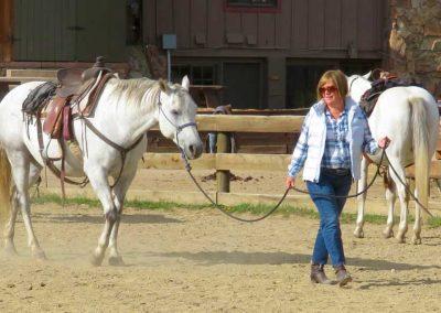 leading-white-horse