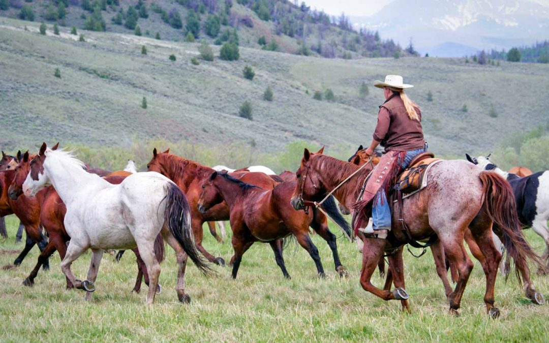 A Letter to Cowgirls Everywhere