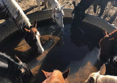 Horses-at-water-troughjpg