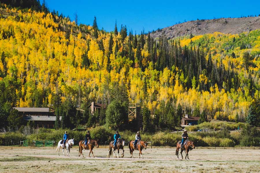 You will ride a wonderful, well-trained horse during this women's wellness retreat!