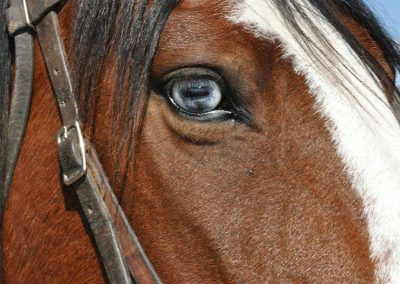 blue-horse-eye-copy