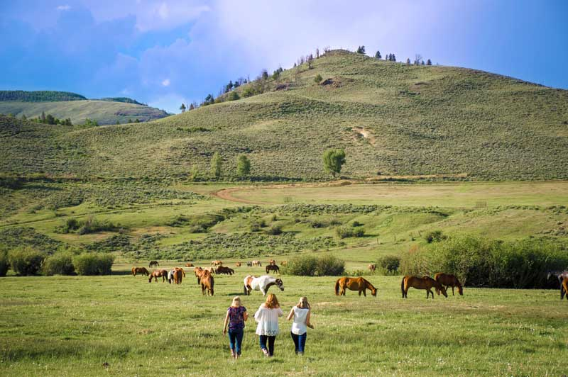 Happy Hour with the Herd occurs in the pasture, to mingle with the horses in their natural environment.